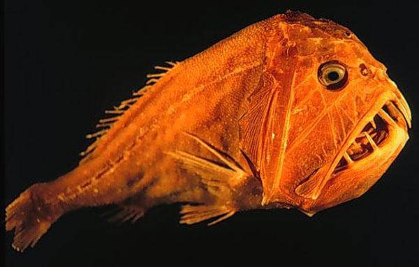Экологи составили список самых страшных животных в мире.